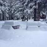 Северную Калифорнию засыпало снегом